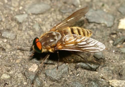 NAVER まとめこれからが本番痛ーい虫刺され!!蚊、アブ、ブユ(ブヨ、ブト)、ヒル、ダニ、夏に出合…